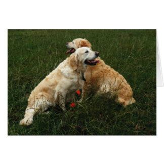 Perros perdigueros de oro tarjeton