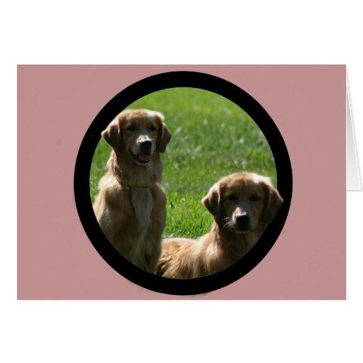 perros perdigueros de oro tarjetas