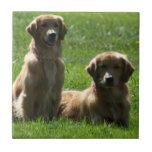 Perros perdigueros de oro tejas  cerámicas