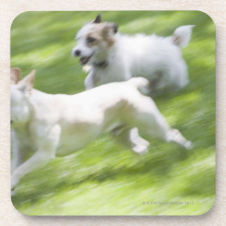 Perros que corren en césped posavaso