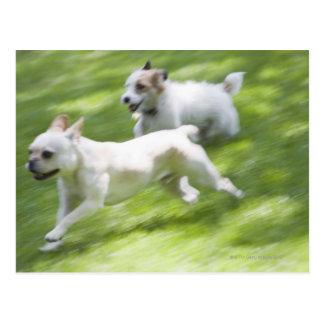 Perros que corren en césped postales