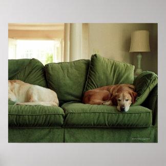 Perros que duermen en el sofá póster