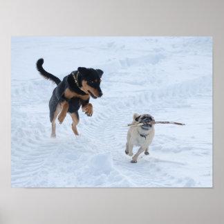 Perros que juegan en la nieve póster