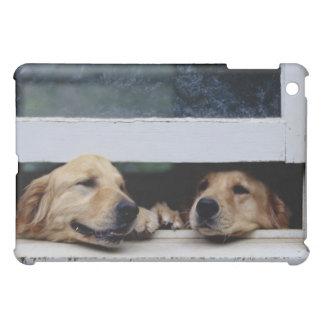 Perros que miran hacia fuera una ventana