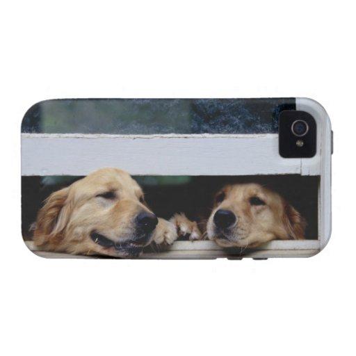 Perros que miran hacia fuera una ventana Case-Mate iPhone 4 fundas