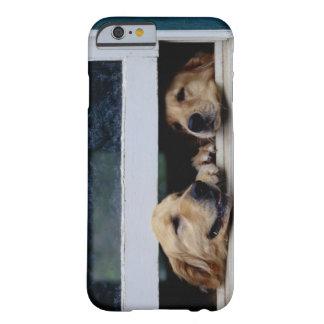 Perros que miran hacia fuera una ventana funda barely there iPhone 6