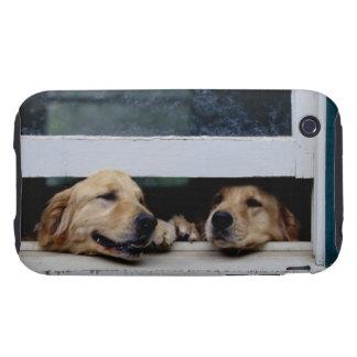 Perros que miran hacia fuera una ventana funda though para iPhone 3
