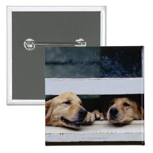 Perros que miran hacia fuera una ventana pin