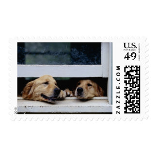 Perros que miran hacia fuera una ventana sellos