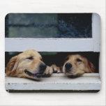 Perros que miran hacia fuera una ventana tapetes de raton