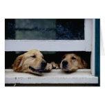 Perros que miran hacia fuera una ventana felicitacion