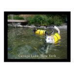 Perros que nadan los chalecos salvavidas postal