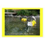 Perros que nadan los chalecos salvavidas plantillas de tarjeta de negocio