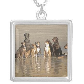 Perros que se sientan en la playa colgante cuadrado