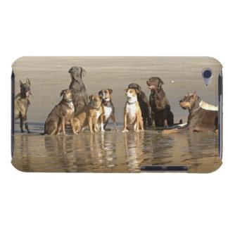 Perros que se sientan en la playa iPod Case-Mate funda