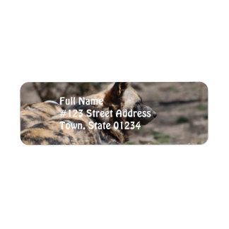 Perros salvajes africanos de reclinación etiquetas de remite