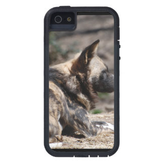 Perros salvajes africanos de reclinación iPhone 5 cárcasas