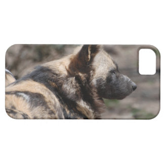 Perros salvajes africanos de reclinación iPhone 5 Case-Mate carcasas