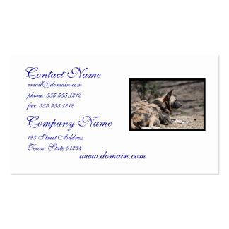 Perros salvajes africanos de reclinación tarjetas personales