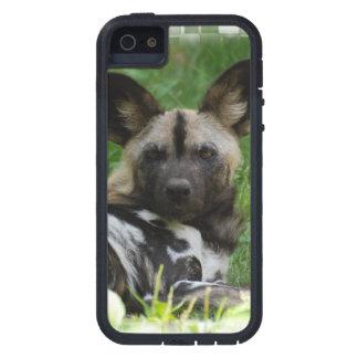 Perros salvajes africanos iPhone 5 cárcasa