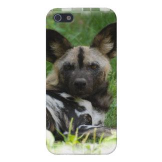 Perros salvajes africanos iPhone 5 funda