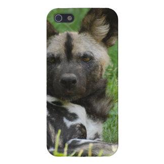 Perros salvajes africanos lindos iPhone 5 fundas
