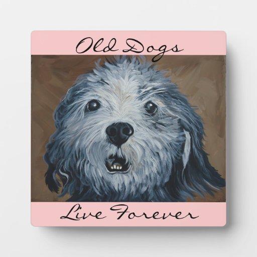 Perros viejos placas con foto