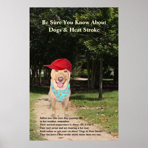 Perros y golpe de calor póster