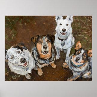 Perros y Heelers Brown del ganado de Cattledogs Póster