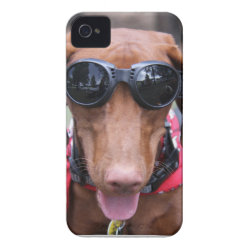 Case-Mate iPhone 4 Barely There Universal Case with Vizsla Phone Cases design