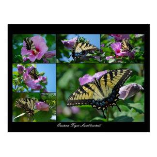 Persecución de mariposas postal