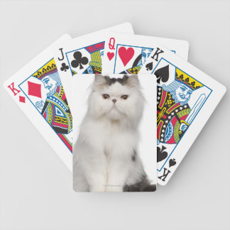 Persian (10 months old) sitting bicycle playing cards
