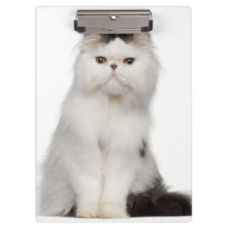Persian (10 months old) sitting clipboard
