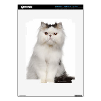 Persian (10 months old) sitting decal for iPad 3