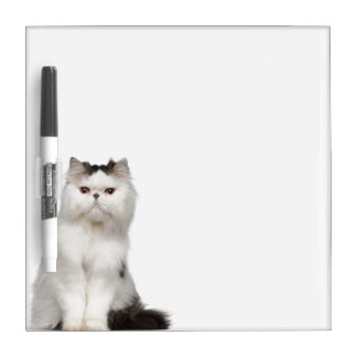 Persian (10 months old) sitting Dry-Erase board