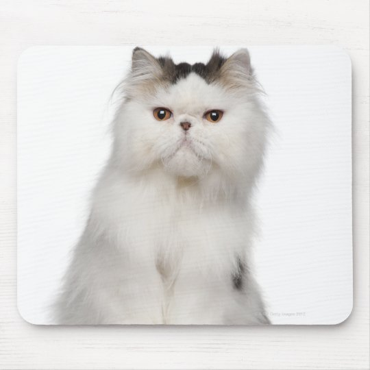 Persian (10 months old) sitting mouse pad