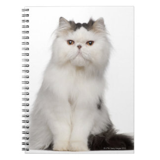 Persian (10 months old) sitting notebook