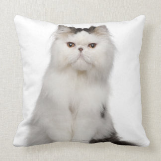 Persian (10 months old) sitting pillow