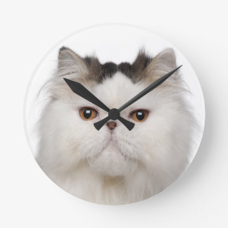 Persian (10 months old) sitting round clock