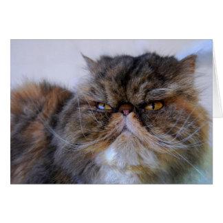 Persian Calico Kitty Princess Card