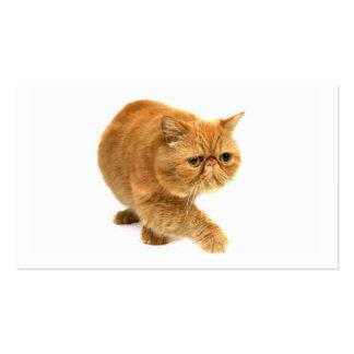 Persian cat business card