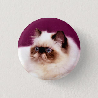 Persian Cat Button