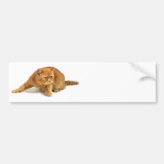 Persian cat car bumper sticker