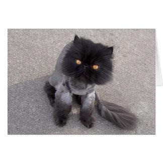 Persian Cat  Card