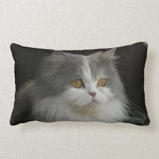 Persian Cat Face American MoJo Pillow