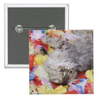 Persian Cat, Felis catus, Brown Tabby, Kitten, 2 2 Inch Square Button