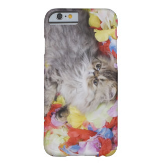 Persian Cat, Felis catus, Brown Tabby, Kitten, 2 Barely There iPhone 6 Case