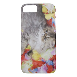 Persian Cat, Felis catus, Brown Tabby, Kitten, 2 iPhone 8/7 Case