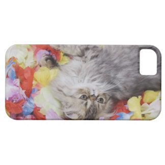 Persian Cat, Felis catus, Brown Tabby, Kitten, 2 iPhone SE/5/5s Case