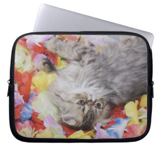 Persian Cat, Felis catus, Brown Tabby, Kitten, 2 Laptop Sleeve